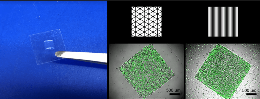 Scanningless and continuous 3D bioprinting of human tissues with dECM