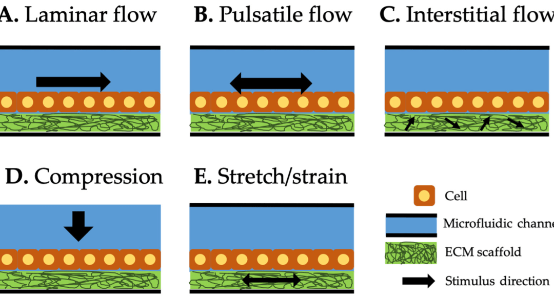 Methods of Delivering Mechanical Stimuli to OOC